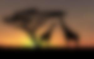 Expresssendungen nach Botswana