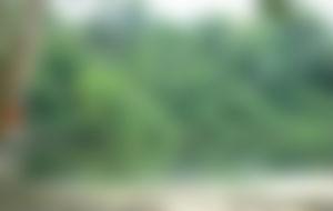 Expresssendungen nach Surinam